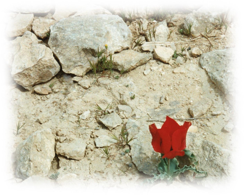 5. Tuhkasta nousee uutta elämää 1992 Negev